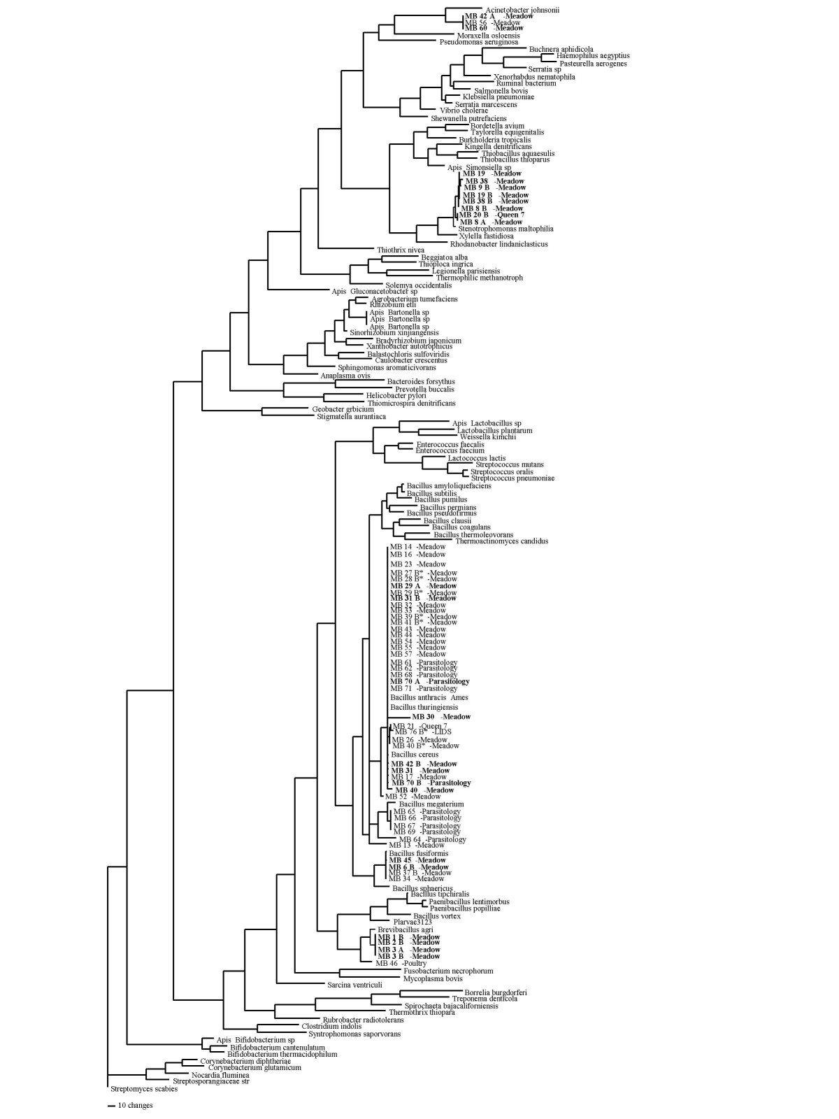 http://static-content.springer.com/image/art%3A10.1186%2F1472-6785-6-4/MediaObjects/12898_2005_Article_57_Fig2_HTML.jpg