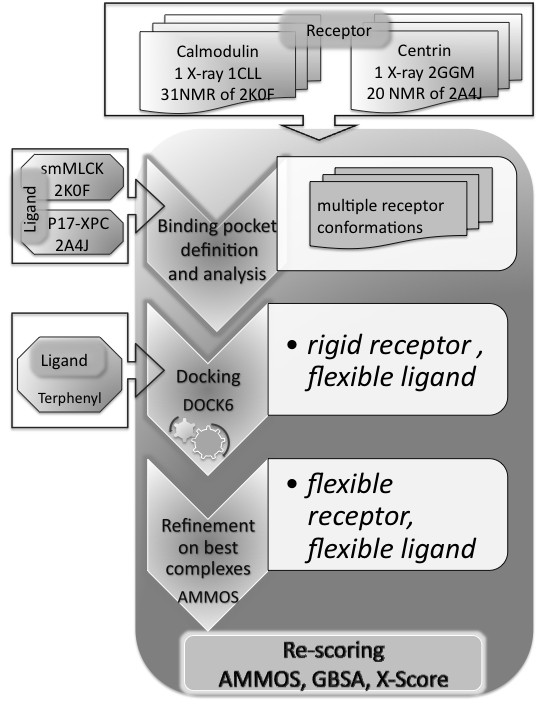 http://static-content.springer.com/image/art%3A10.1186%2F1472-6807-11-24/MediaObjects/12900_2011_Article_371_Fig4_HTML.jpg