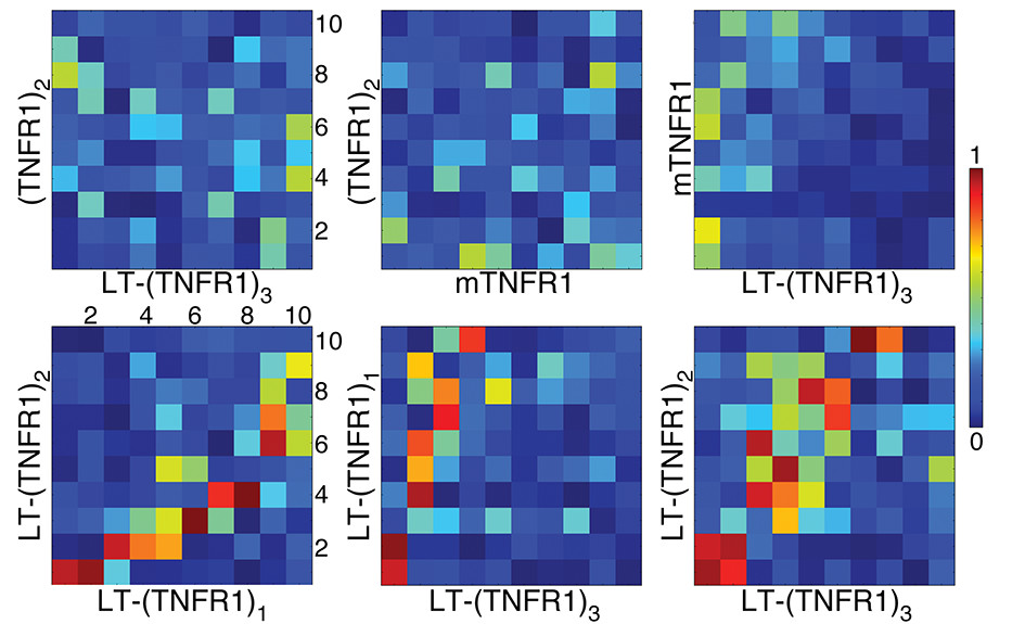 http://static-content.springer.com/image/art%3A10.1186%2F1472-6807-12-8/MediaObjects/12900_2011_Article_404_Fig10_HTML.jpg
