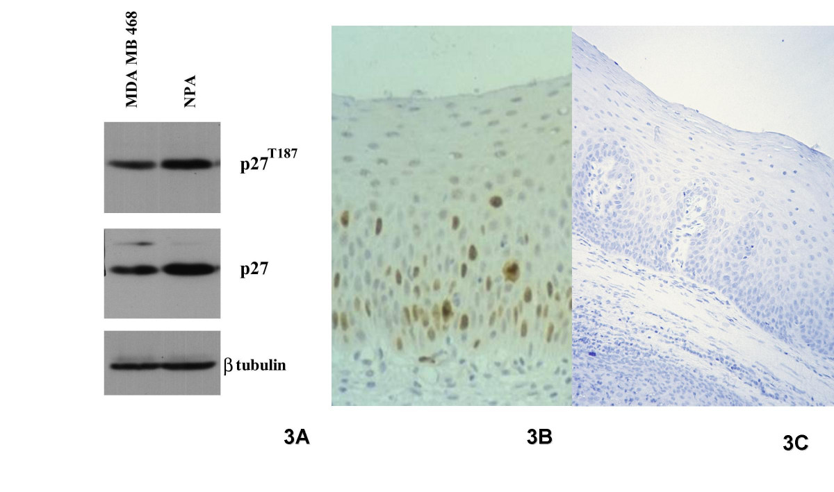 http://static-content.springer.com/image/art%3A10.1186%2F1472-6890-5-3/MediaObjects/12907_2004_Article_22_Fig3_HTML.jpg