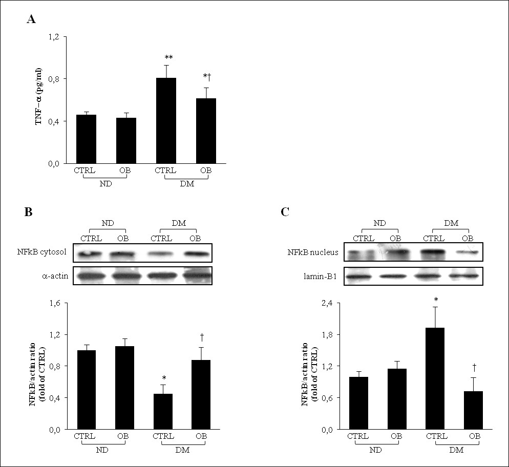 http://static-content.springer.com/image/art%3A10.1186%2F1475-2840-11-129/MediaObjects/12933_2012_Article_567_Fig2_HTML.jpg