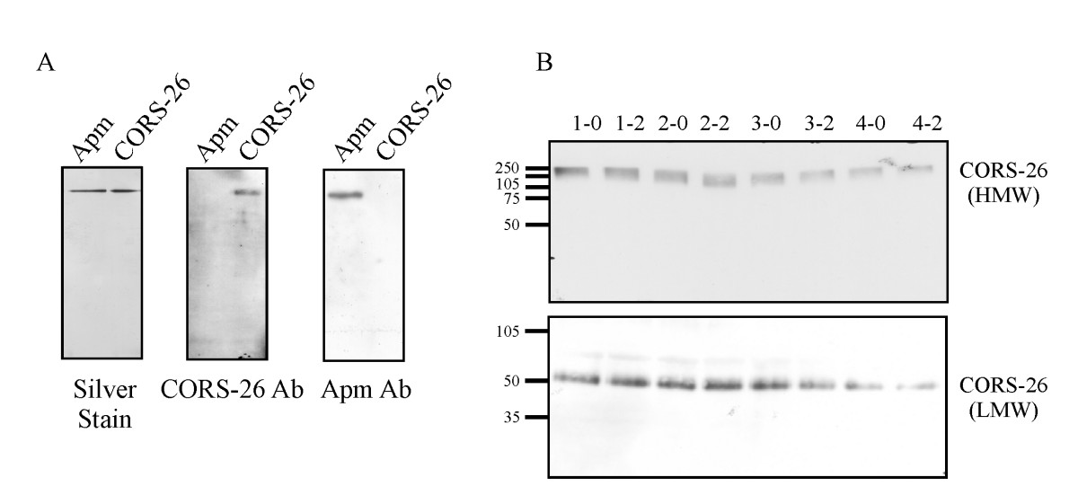 http://static-content.springer.com/image/art%3A10.1186%2F1475-2840-6-7/MediaObjects/12933_2006_Article_86_Fig2_HTML.jpg