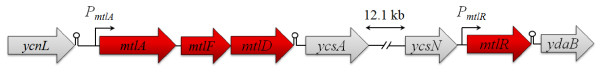 http://static-content.springer.com/image/art%3A10.1186%2F1475-2859-10-83/MediaObjects/12934_2011_598_Fig1_HTML.jpg