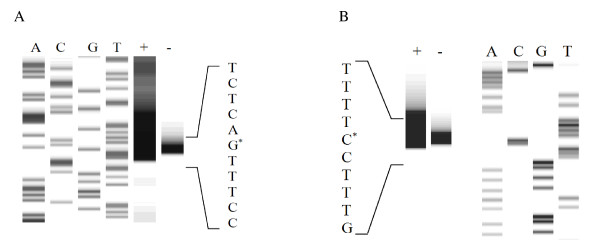 http://static-content.springer.com/image/art%3A10.1186%2F1475-2859-10-83/MediaObjects/12934_2011_598_Fig4_HTML.jpg