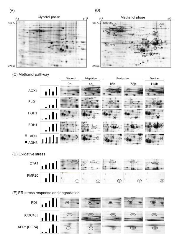 http://static-content.springer.com/image/art%3A10.1186%2F1475-2859-11-103/MediaObjects/12934_2012_770_Fig1_HTML.jpg