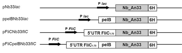 http://static-content.springer.com/image/art%3A10.1186%2F1475-2859-11-23/MediaObjects/12934_2011_647_Fig1_HTML.jpg