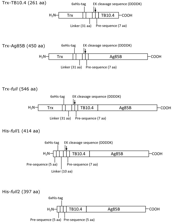 http://static-content.springer.com/image/art%3A10.1186%2F1475-2859-12-115/MediaObjects/12934_2013_906_Fig1_HTML.jpg