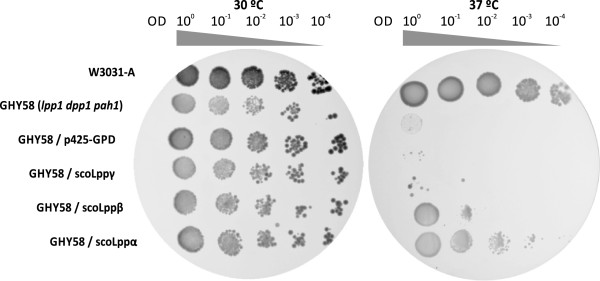 http://static-content.springer.com/image/art%3A10.1186%2F1475-2859-12-9/MediaObjects/12934_2012_808_Fig4_HTML.jpg