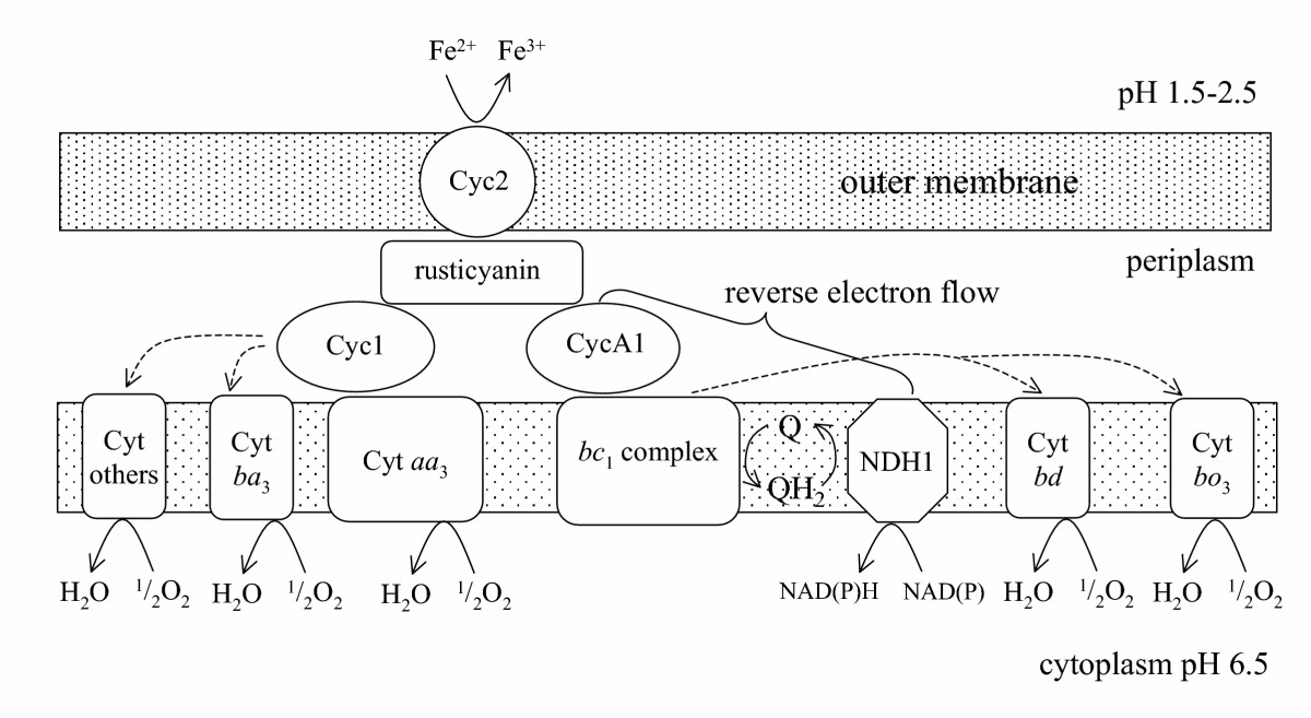 http://static-content.springer.com/image/art%3A10.1186%2F1475-2859-4-13/MediaObjects/12934_2005_Article_41_Fig1_HTML.jpg