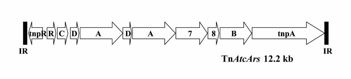 http://static-content.springer.com/image/art%3A10.1186%2F1475-2859-4-13/MediaObjects/12934_2005_Article_41_Fig3_HTML.jpg