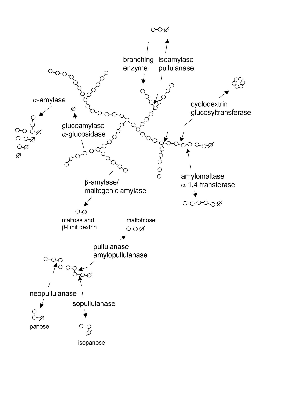 http://static-content.springer.com/image/art%3A10.1186%2F1475-2859-6-9/MediaObjects/12934_2007_Article_252_Fig2_HTML.jpg