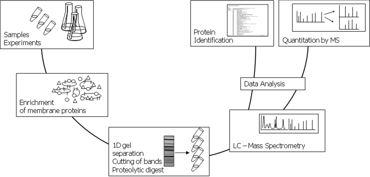 http://static-content.springer.com/image/art%3A10.1186%2F1475-2859-7-10/MediaObjects/12934_2007_Article_292_Fig2_HTML.jpg