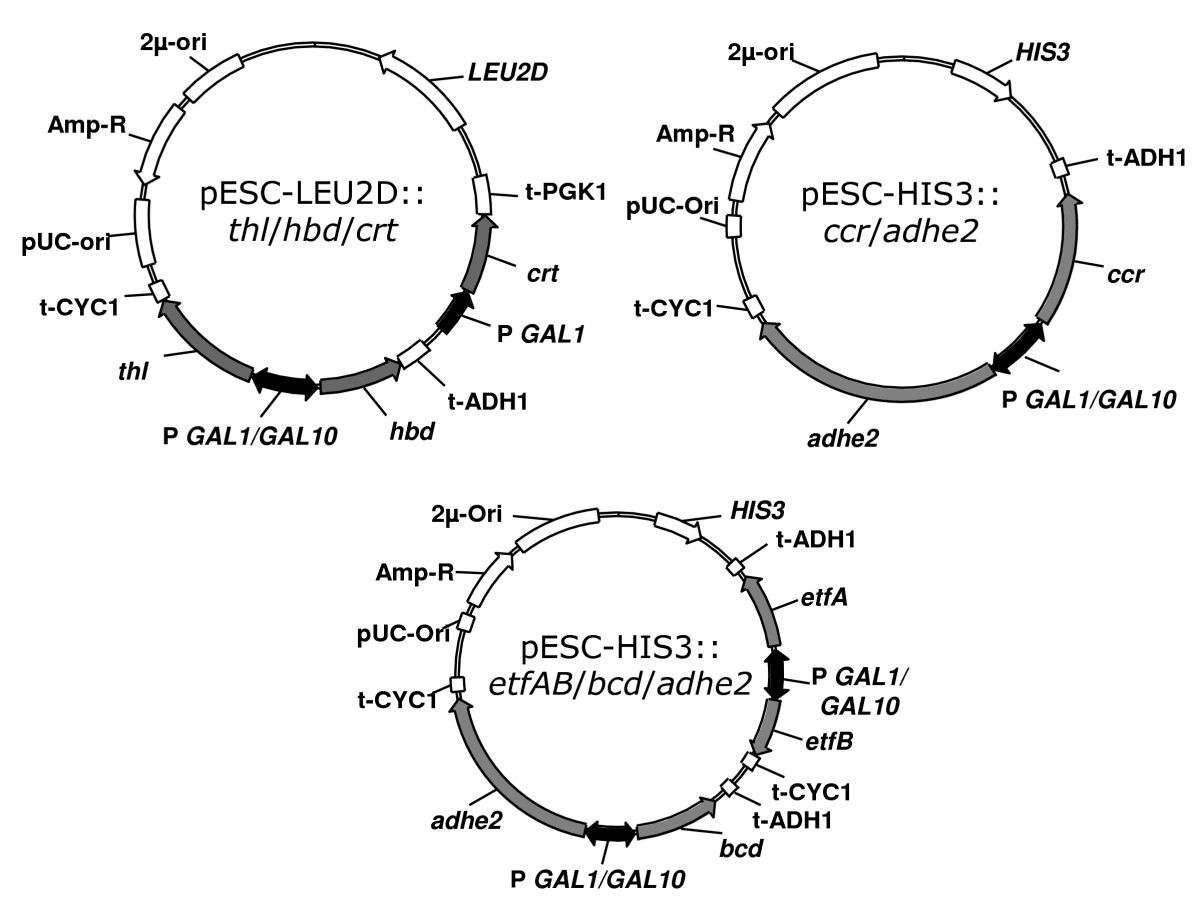 http://static-content.springer.com/image/art%3A10.1186%2F1475-2859-7-36/MediaObjects/12934_2008_Article_318_Fig2_HTML.jpg