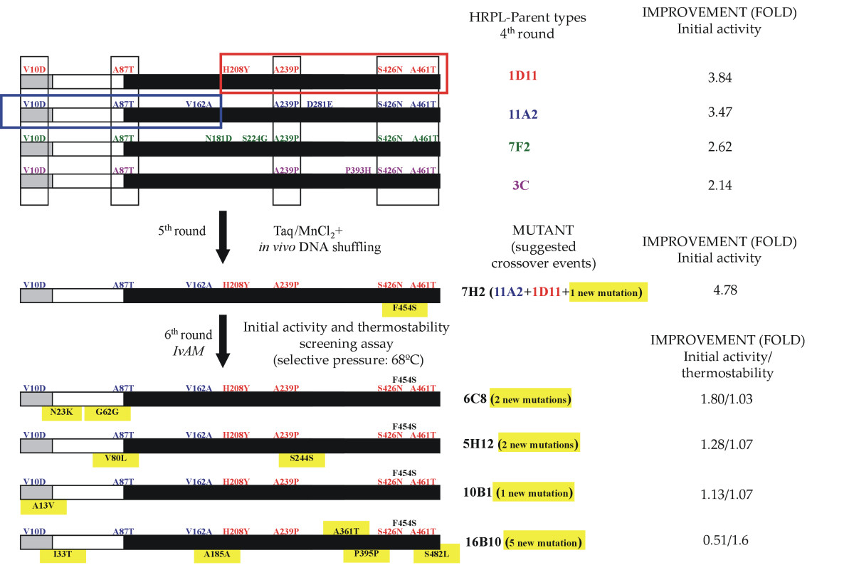 http://static-content.springer.com/image/art%3A10.1186%2F1475-2859-9-17/MediaObjects/12934_2009_Article_407_Fig7_HTML.jpg