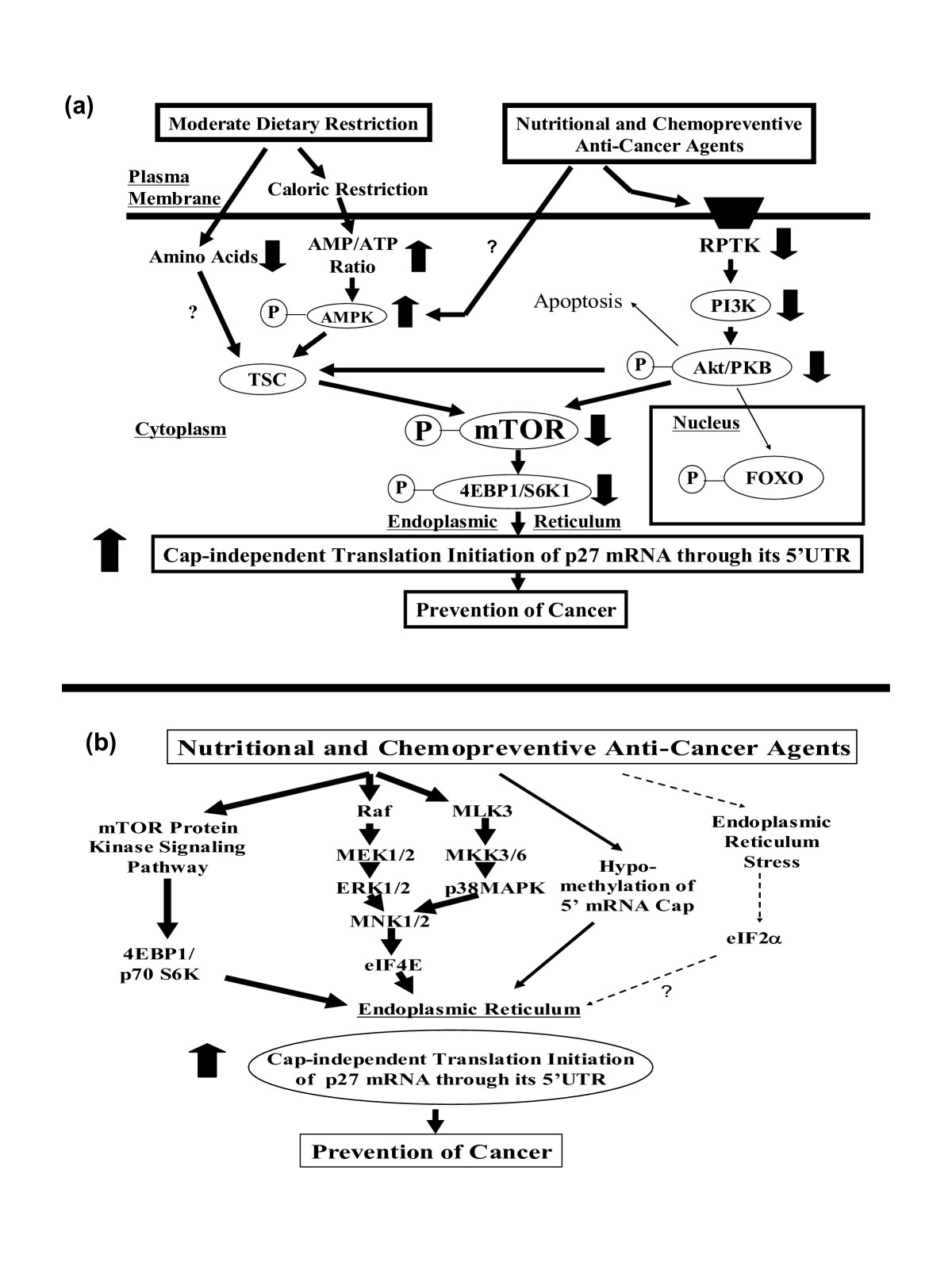 http://static-content.springer.com/image/art%3A10.1186%2F1475-2867-6-20/MediaObjects/12935_2006_Article_156_Fig10_HTML.jpg