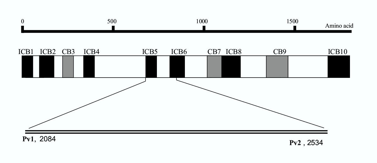 http://static-content.springer.com/image/art%3A10.1186%2F1475-2875-3-4/MediaObjects/12936_2003_Article_70_Fig1_HTML.jpg