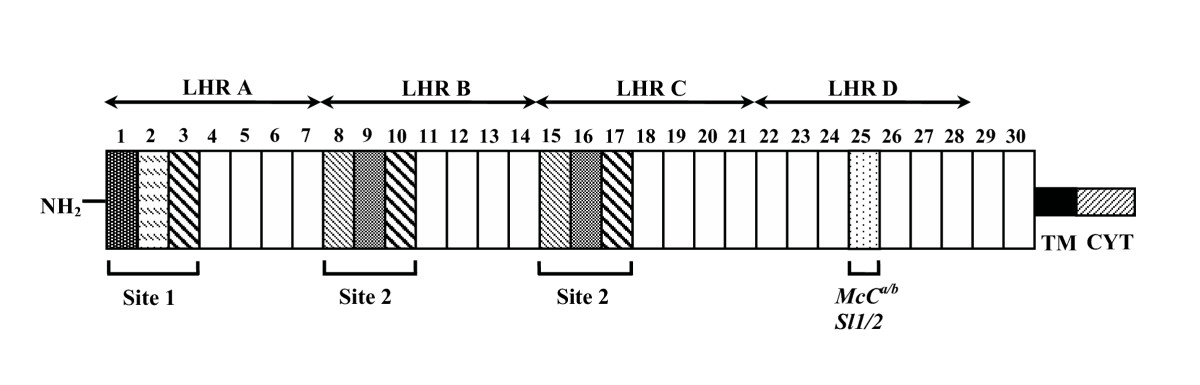 http://static-content.springer.com/image/art%3A10.1186%2F1475-2875-4-54/MediaObjects/12936_2005_Article_169_Fig1_HTML.jpg