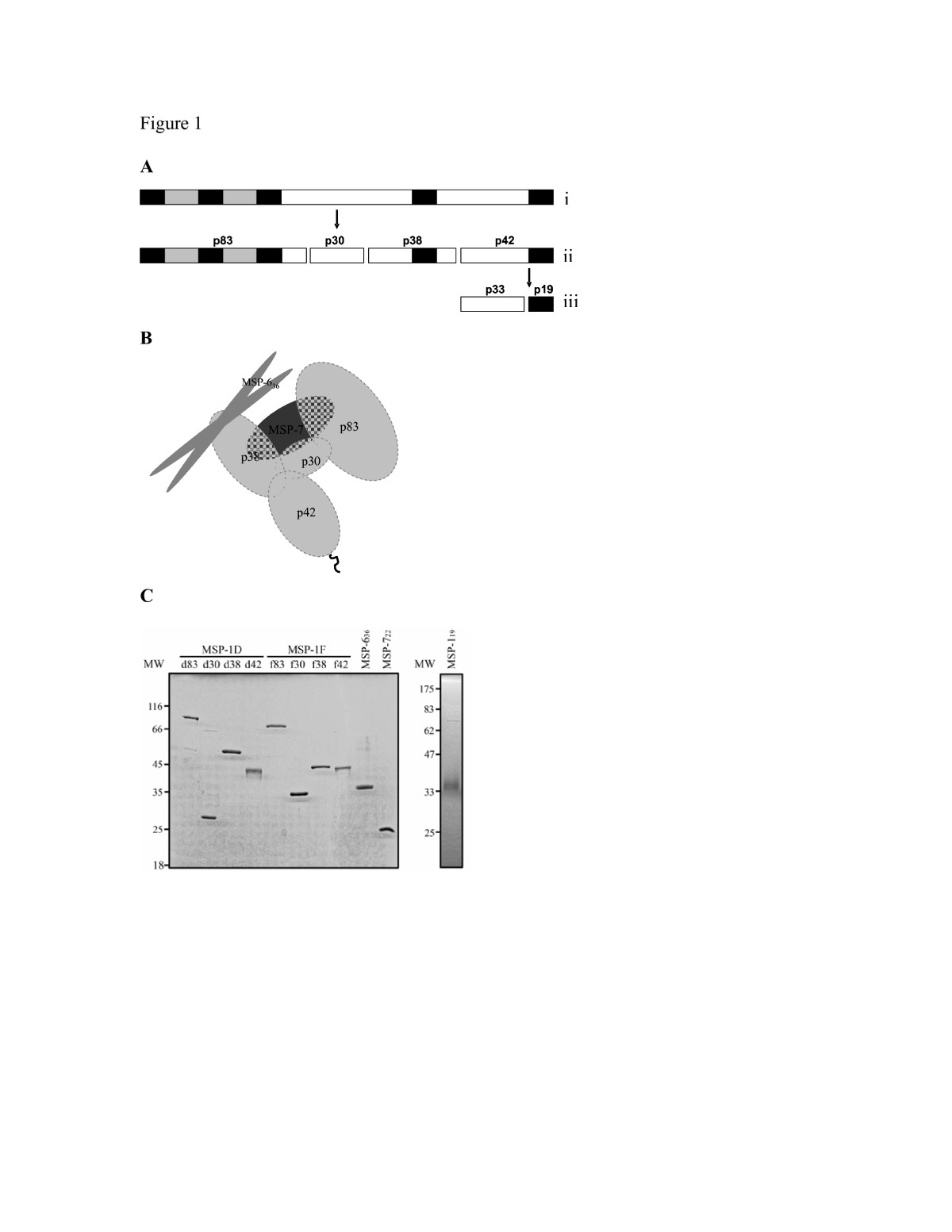 http://static-content.springer.com/image/art%3A10.1186%2F1475-2875-7-121/MediaObjects/12936_2008_Article_596_Fig1_HTML.jpg