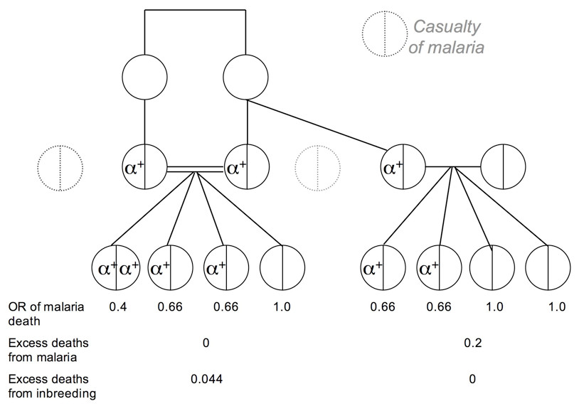 http://static-content.springer.com/image/art%3A10.1186%2F1475-2875-7-150/MediaObjects/12936_2008_Article_625_Fig4_HTML.jpg