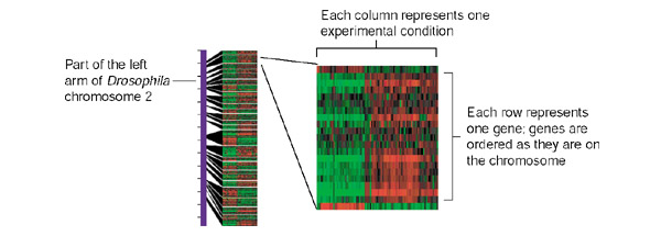 http://static-content.springer.com/image/art%3A10.1186%2F1475-4924-1-2/MediaObjects/13061_2002_Article_2_Fig1_HTML.jpg
