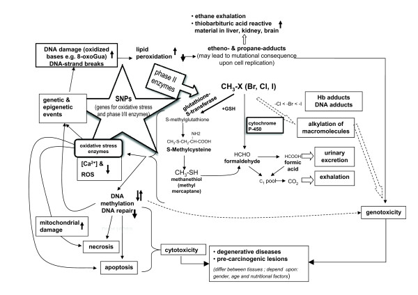 http://static-content.springer.com/image/art%3A10.1186%2F1476-069X-11-5/MediaObjects/12940_2011_510_Fig1_HTML.jpg