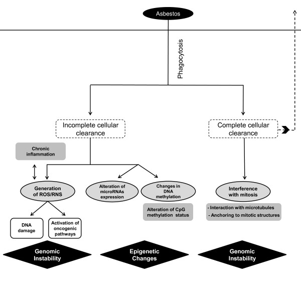 http://static-content.springer.com/image/art%3A10.1186%2F1476-069X-11-89/MediaObjects/12940_2012_607_Fig3_HTML.jpg