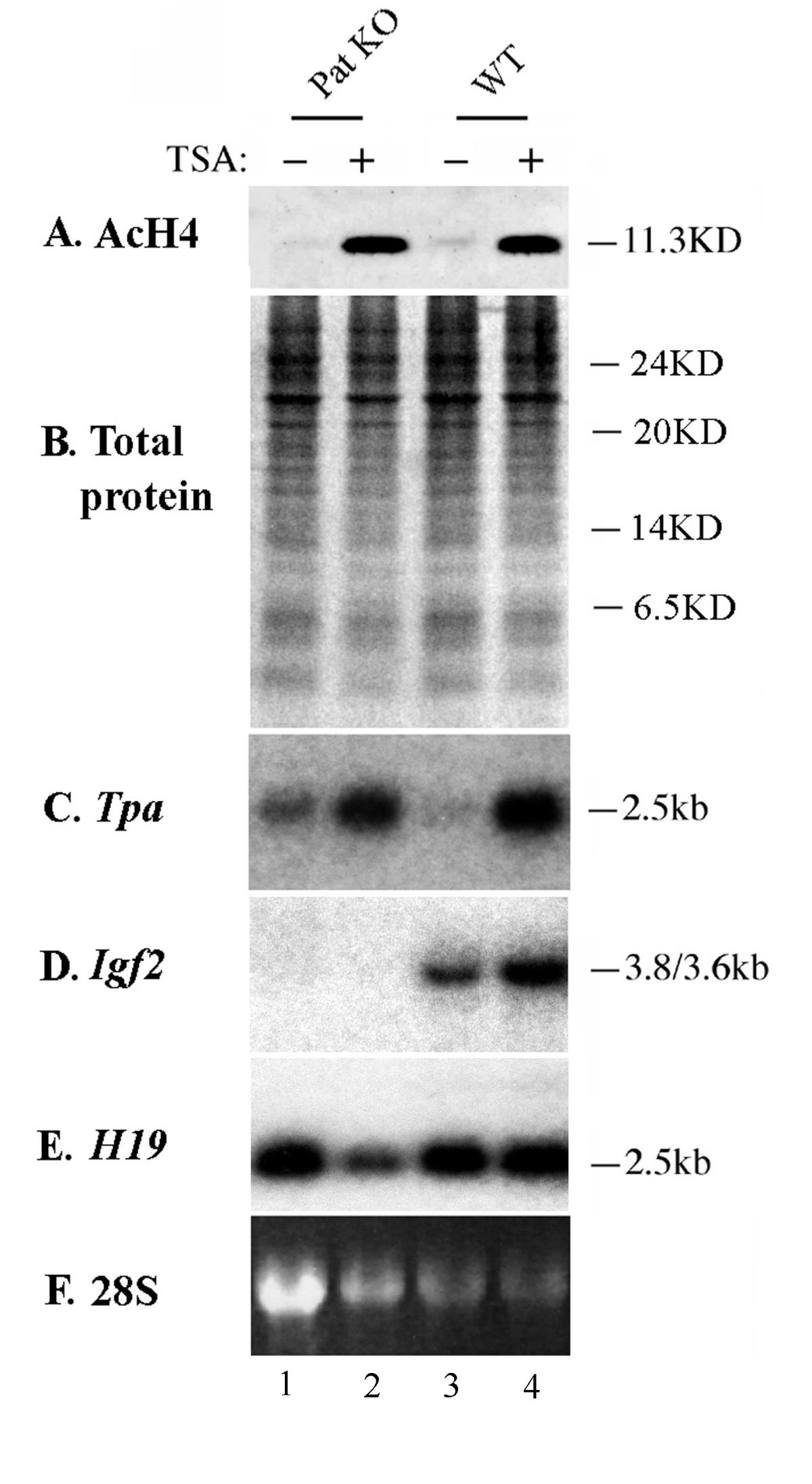 http://static-content.springer.com/image/art%3A10.1186%2F1476-4598-1-2/MediaObjects/12943_2002_Article_2_Fig4_HTML.jpg