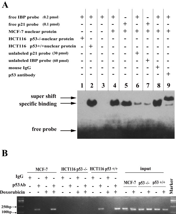 http://static-content.springer.com/image/art%3A10.1186%2F1476-4598-11-54/MediaObjects/12943_2012_Article_1025_Fig3_HTML.jpg