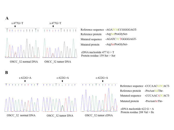 http://static-content.springer.com/image/art%3A10.1186%2F1476-4598-12-68/MediaObjects/12943_2013_Article_1128_Fig5_HTML.jpg