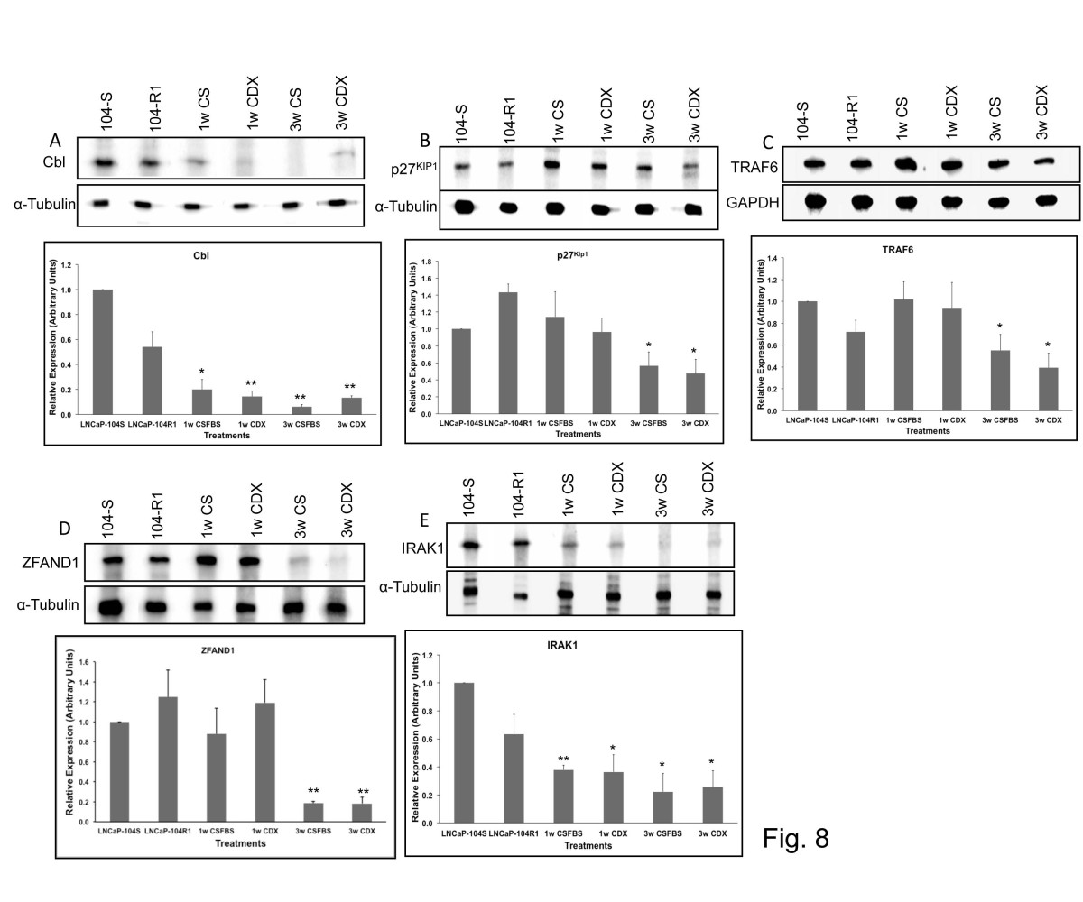 http://static-content.springer.com/image/art%3A10.1186%2F1476-4598-13-1/MediaObjects/12943_2013_Article_1233_Fig8_HTML.jpg