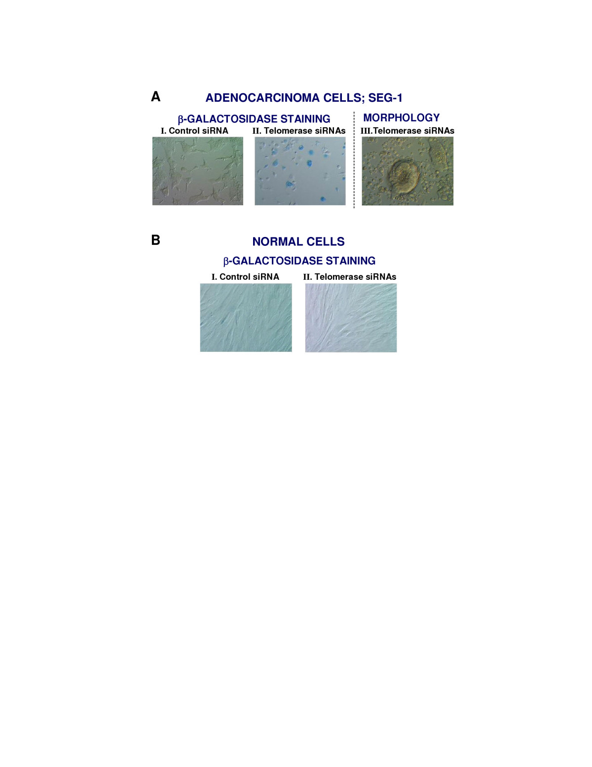 http://static-content.springer.com/image/art%3A10.1186%2F1476-4598-4-24/MediaObjects/12943_2005_Article_113_Fig4_HTML.jpg