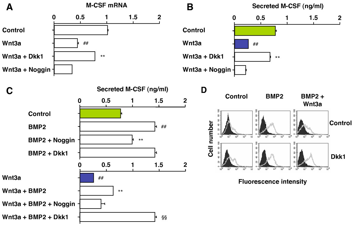 dkk1 restores wnt3a-dependent loss of m-csf in c2c12 cells.