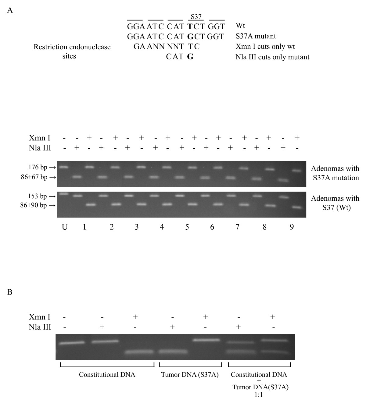 http://static-content.springer.com/image/art%3A10.1186%2F1476-4598-7-53/MediaObjects/12943_2008_Article_344_Fig2_HTML.jpg