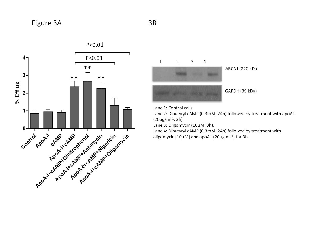 http://static-content.springer.com/image/art%3A10.1186%2F1476-511X-11-169/MediaObjects/12944_2012_Article_802_Fig3_HTML.jpg