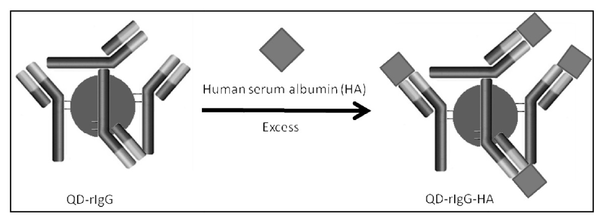 http://static-content.springer.com/image/art%3A10.1186%2F1477-3155-6-10/MediaObjects/12951_2008_Article_62_Fig12_HTML.jpg