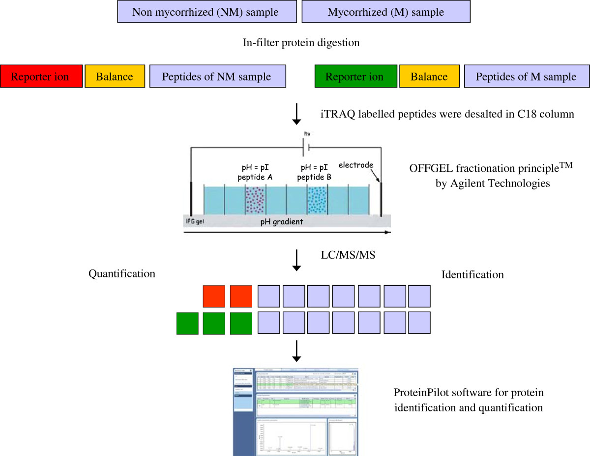 http://static-content.springer.com/image/art%3A10.1186%2F1477-5956-10-37/MediaObjects/12953_2011_Article_368_Fig1_HTML.jpg