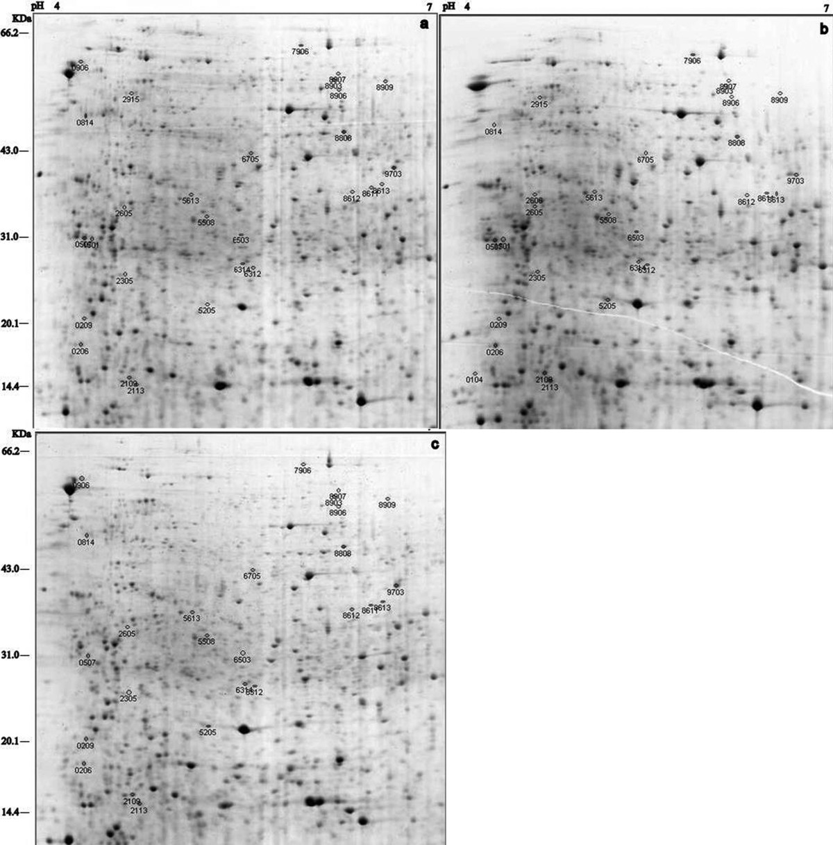 http://static-content.springer.com/image/art%3A10.1186%2F1477-5956-9-44/MediaObjects/12953_2011_Article_264_Fig3_HTML.jpg