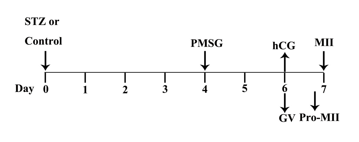 http://static-content.springer.com/image/art%3A10.1186%2F1477-7827-11-31/MediaObjects/12958_2012_Article_1086_Fig1_HTML.jpg
