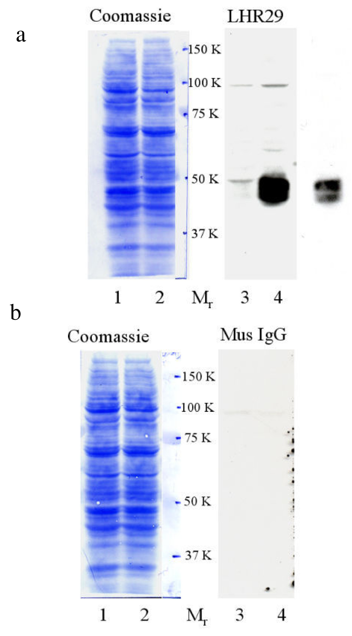 http://static-content.springer.com/image/art%3A10.1186%2F1477-7827-3-25/MediaObjects/12958_2005_Article_233_Fig4_HTML.jpg