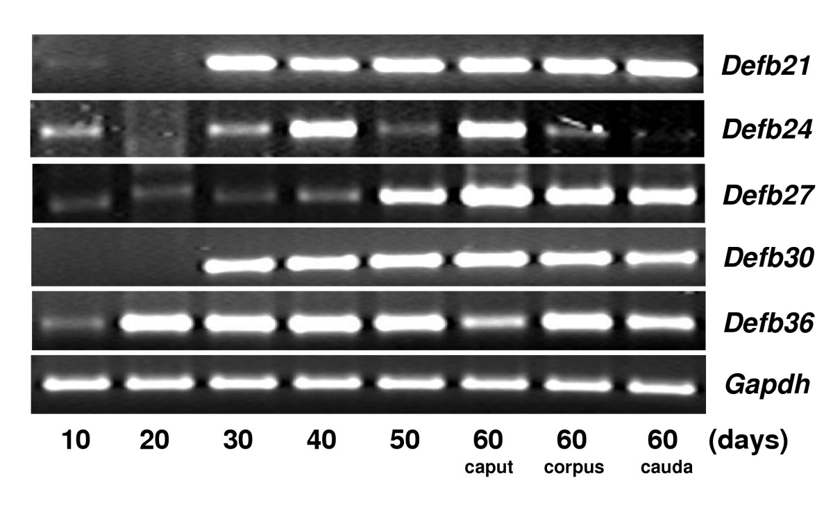 http://static-content.springer.com/image/art%3A10.1186%2F1477-7827-4-7/MediaObjects/12958_2005_Article_289_Fig5_HTML.jpg