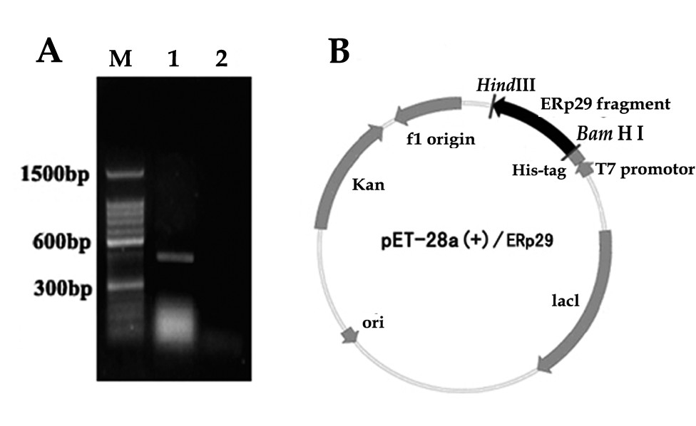 http://static-content.springer.com/image/art%3A10.1186%2F1477-7827-8-10/MediaObjects/12958_2009_Article_635_Fig3_HTML.jpg