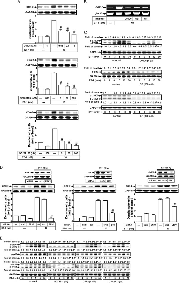 http://static-content.springer.com/image/art%3A10.1186%2F1478-811X-11-8/MediaObjects/12964_2012_295_Fig4_HTML.jpg