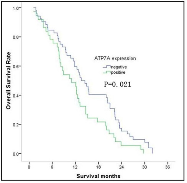 http://static-content.springer.com/image/art%3A10.1186%2F1479-5876-10-21/MediaObjects/12967_2011_994_Fig5_HTML.jpg
