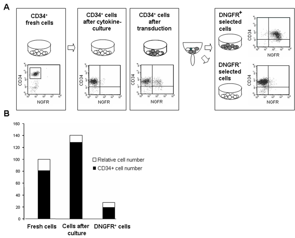 http://static-content.springer.com/image/art%3A10.1186%2F1479-5876-5-35/MediaObjects/12967_2007_Article_195_Fig1_HTML.jpg
