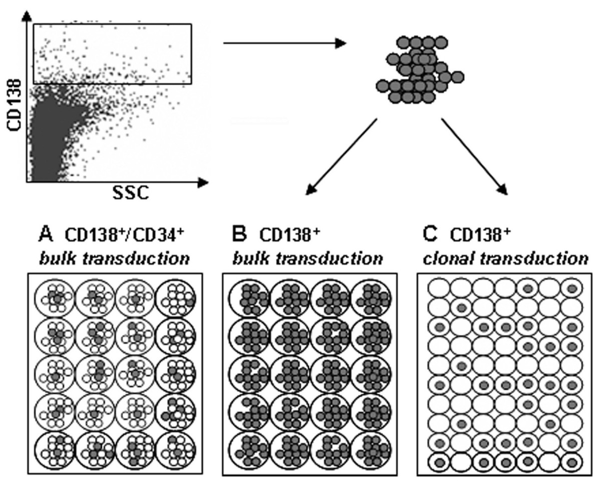 http://static-content.springer.com/image/art%3A10.1186%2F1479-5876-5-35/MediaObjects/12967_2007_Article_195_Fig2_HTML.jpg