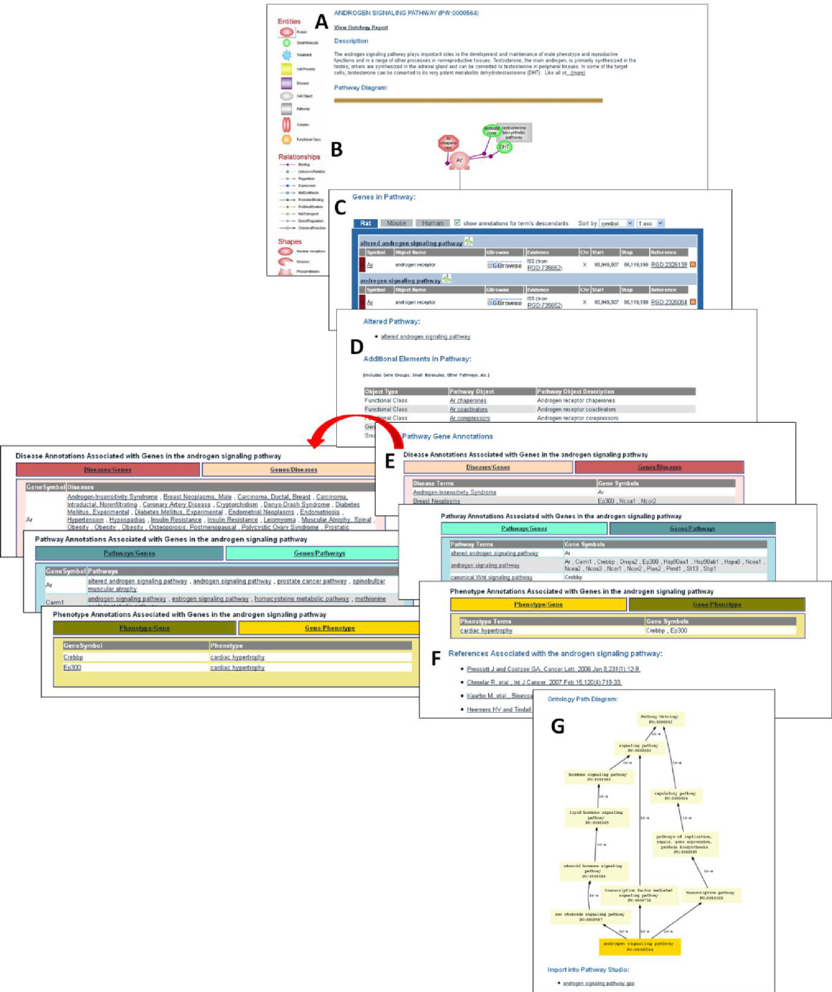 http://static-content.springer.com/image/art%3A10.1186%2F1479-7364-7-4/MediaObjects/40246_2012_Article_30_Fig2_HTML.jpg