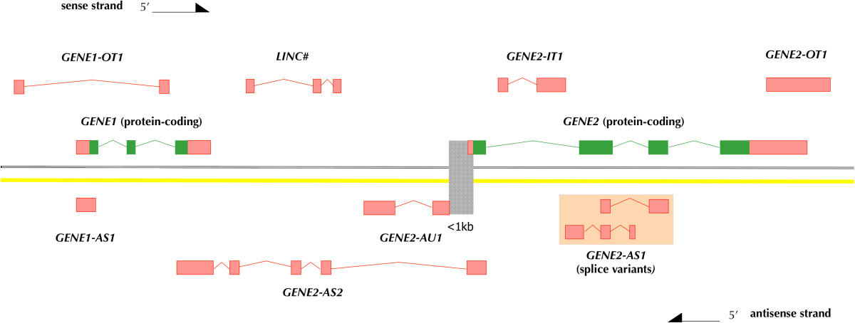 http://static-content.springer.com/image/art%3A10.1186%2F1479-7364-8-7/MediaObjects/40246_2014_Article_63_Fig1_HTML.jpg