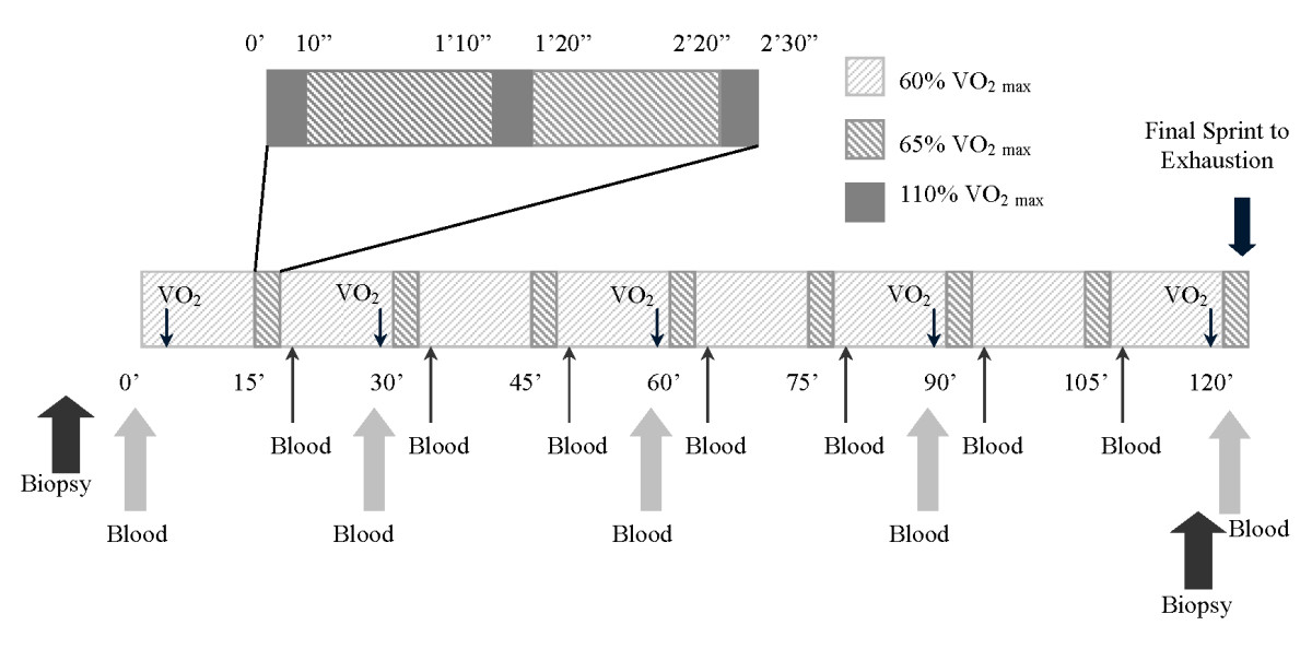 http://static-content.springer.com/image/art%3A10.1186%2F1550-2783-7-26/MediaObjects/12970_2010_Article_176_Fig1_HTML.jpg