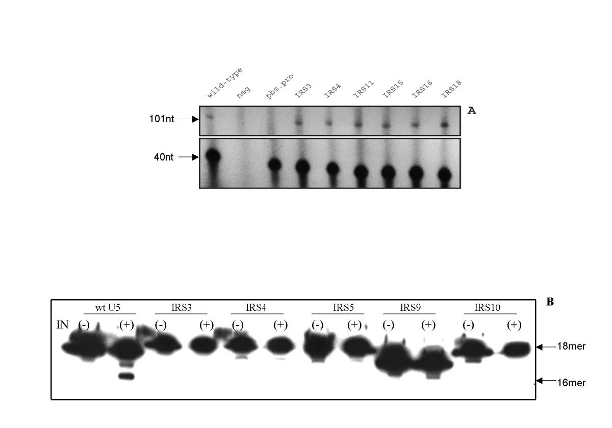 http://static-content.springer.com/image/art%3A10.1186%2F1741-7007-2-8/MediaObjects/12915_2004_Article_10_Fig4_HTML.jpg