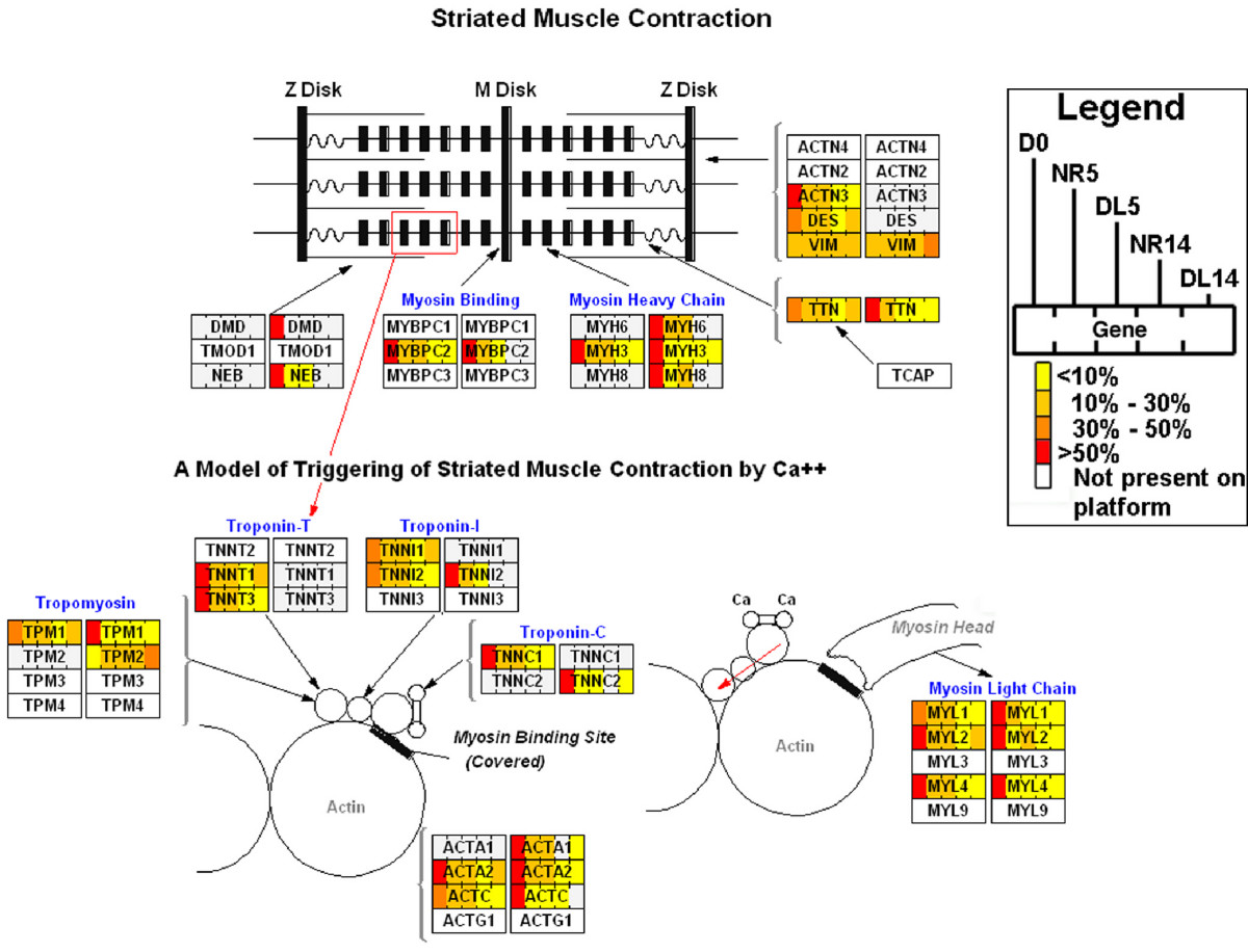 http://static-content.springer.com/image/art%3A10.1186%2F1741-7007-7-1/MediaObjects/12915_2008_Article_209_Fig4_HTML.jpg